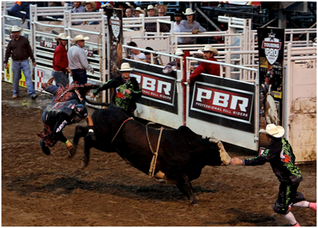 A history of the rodeo