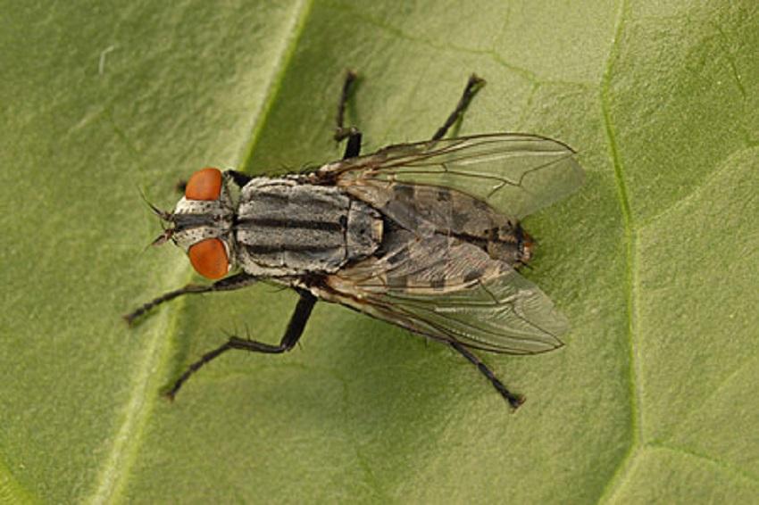get rid of horse flies