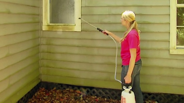 Homeowner Solutions For Basement Mold And Mildew