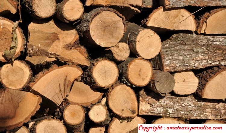 What is woody biomass