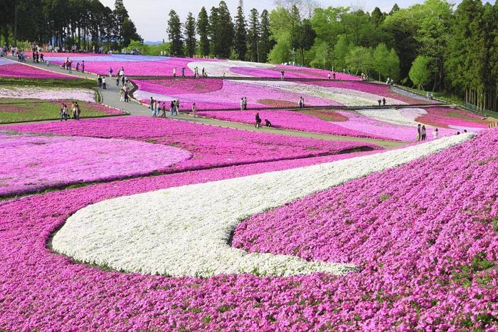 Hitsujiyama Park, Japan