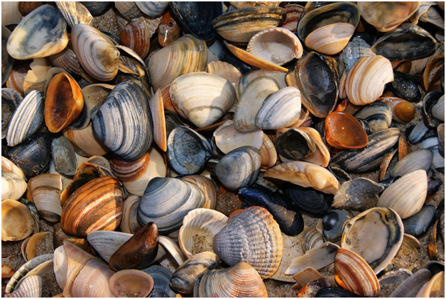 How a shellfish may be the key to cleaning polluted rivers