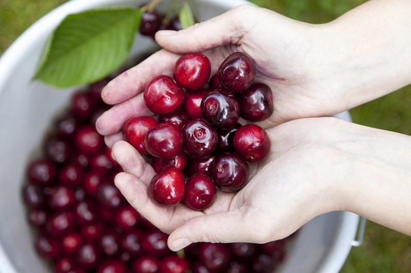 How to store cherries